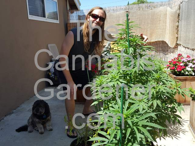 The Cannabis Gardener with his organic plants and dog.