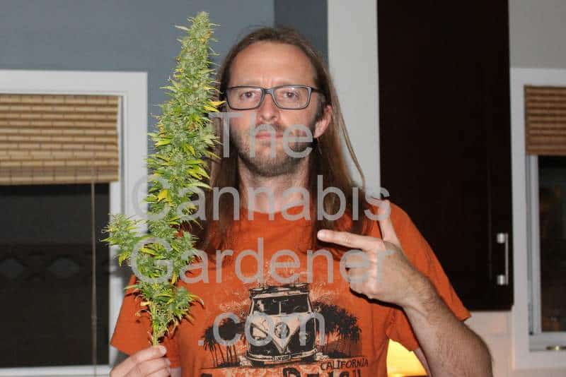 The Cannabis Gardener holding a large cola